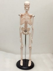 45cm Human Skeleton Model